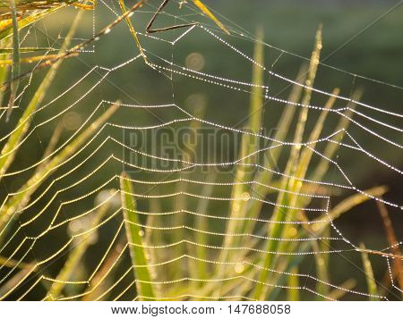 Cobweb on meadow in wild nature during sunny day