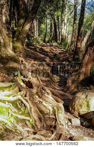 Beautiful Landscape With Tree Roots At Convento De Las Batuecas