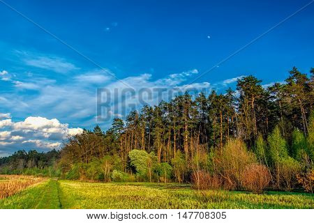 Mixed deciduous-coniferous forest landscape under evening sky with clouds in sunlight Irpin Ukraine. Green meadow with trail to forest with sun beam