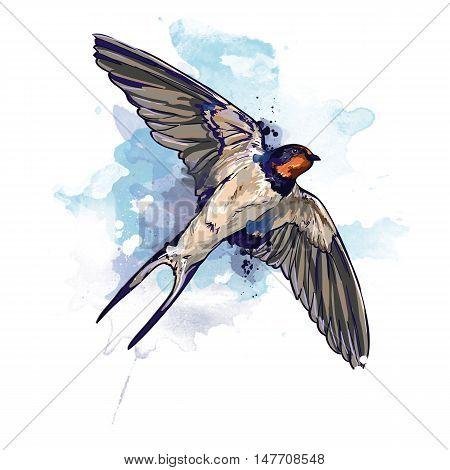 Spring bird. Watercolor swallow illustration. Swallow in flight watercolor