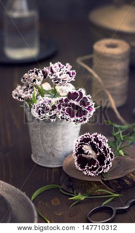 Sweet william flowers on table still life toned