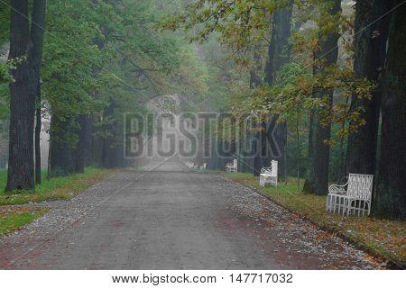 Misty autumn morning in Catherine park in Tsarskoye Selo