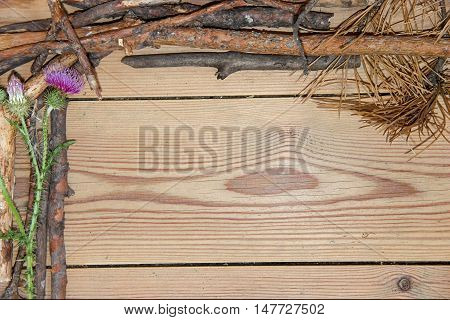 decoration composition on wooden background. Top view of boards lined made of fir branches violet-pink flowers of prickly thistle with place for your text