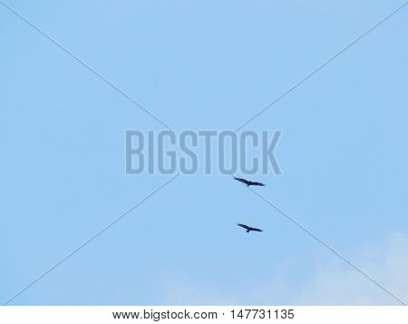 Two flying birds on blue sky during day