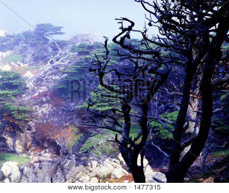 Point Lobos St Reserve Ca 94