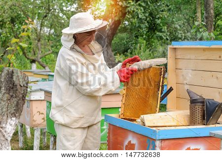 A woman beekeeper selects honey comb honey to drain.
