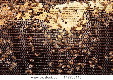 Bees convert nectar into honey and cover it in dark honeycombs.