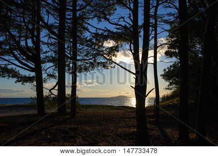 Summer evening by the coast with backlit tree trunks and an island in the horizon