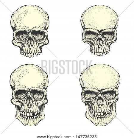 Set of hand drawn human skulls. Design elements for emblem poster t-shirt or apparel print. Vector illustration.