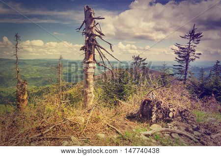 Touristic signs pointing the way on a tree in mountains in vintage style.