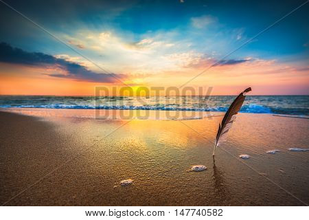 Gull feather stuck into the sand sea sunrise shot