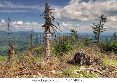 Touristic signs pointing the way on a tree in mountains.