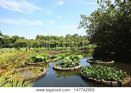 Beautiful scenery with lotus flowers,water hyacinths and aquatic plants in the pond in summer