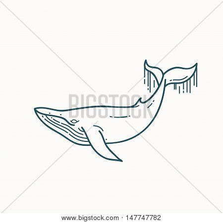 Whale linear illustration. Flat line vector design element isolated on white