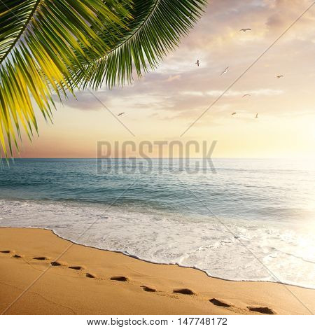 Idyllic tropical beach with palm leaves and foot prints in the sand at sunset
