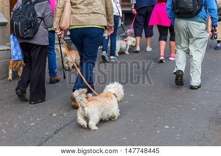 People With Dandie Dinmont Terrier In The City