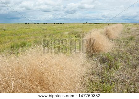 Green field with grass caught in barbed wire fence in outback