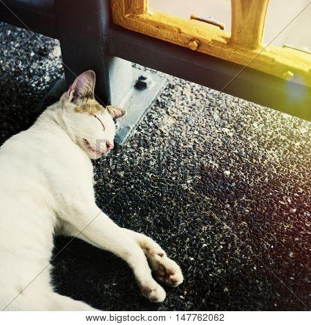 Cat Asleep Kitten Nap Tired Resting Dreaming Concept