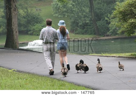 Nachfolgende Duckies