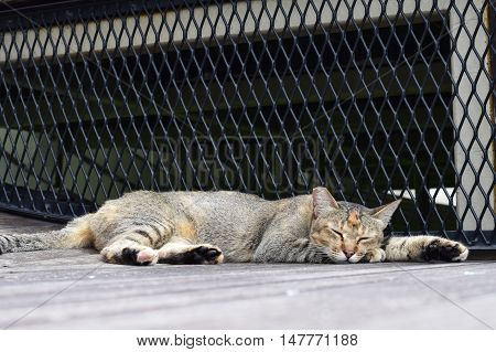 A cat lazing outdoor enjoying the sun