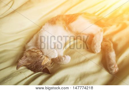 cute domestic little cat lying on bed with her family