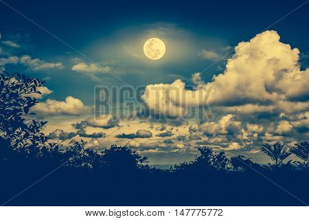 Silhouettes Of Tree Against Night Sky And Bright Moon. Outdoor. Cross Process And Vintage Tone Effec
