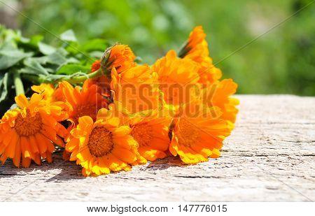 Orange calendula flowers on the wooden background