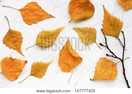 Dried autumn golden leaves scattered soaring style, flat lay on sketch mock-up, bare tree branch.  Autumn season background. Fall craft with dried leaves.