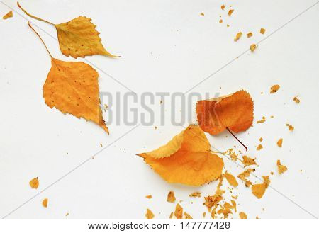 Framed minimalistic composition dried golden autumn leaves. Leaves in corners and crushed details. Fall simple pretty empty flat lay background.