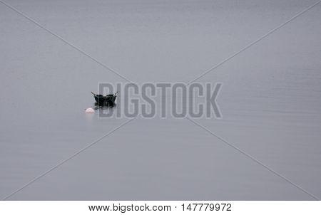 Boat on the mystic foggy lake (Lake Teanau)