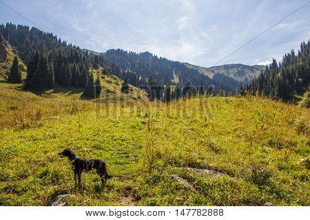 Lonely dog on the mountain range in Almaty Kazakhstan