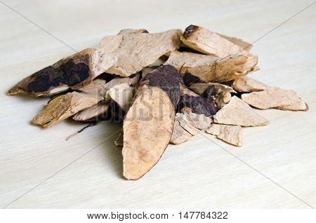 Trigonostemon Reidioides Kurz Craib Isolated On Wood