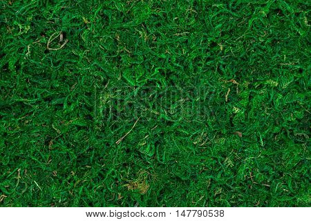 Natural texture of bright green dry moss