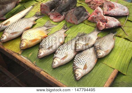 Freshly caught catfish on palm leaf in a morning fish market, Luang Prabang, Laos