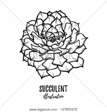 Hand Drawn Vector Illustration - Succulent. Sketch On White Background. Perfect For Wedding Invitati