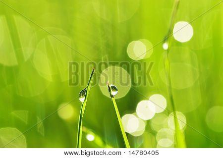 Hierba de la mañana con gotas de rocío