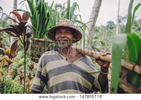 Happy Senior Farmer Carrying A Yoke On His Shoulders