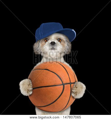 Cute little dog in cap holding a ball -- isolated on black