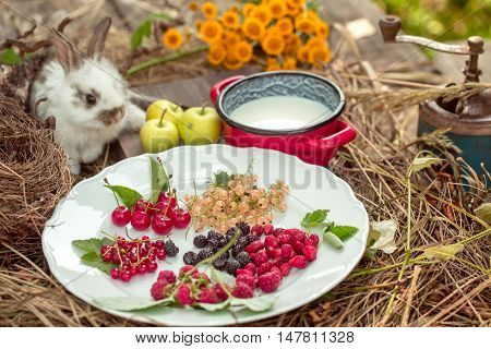 Rabbit With Wild Berries Milk And Green Apples