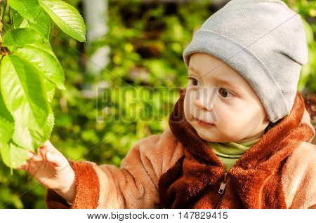 Dressed baby reaches for the green leaves in the park