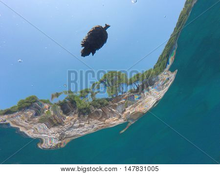 Cones Pinecone Floating In The Blue Sea