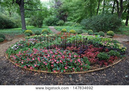 Bright Plants In The Flowerbed
