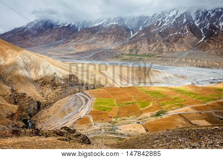 Fields in Spiti Valley in Himalayas. Himachal Pradesh, India