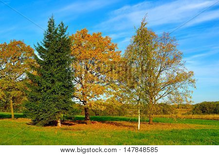 Colorful sunny autumn field landscape. Autumn nature landscape-yellowed autumn field in autumn sunny weather. Picturesque autumn landscape view of autumn nature. Soft focus. Autumn nature in sunlight