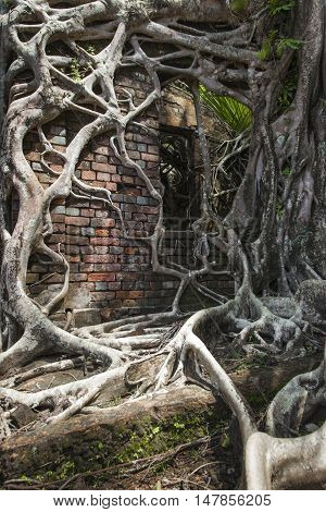 Ruin Of Abandoned Building Covered With Roots On Ross Island. Andaman Islands, India