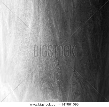Palm wax grey texture light and dark shadow background
