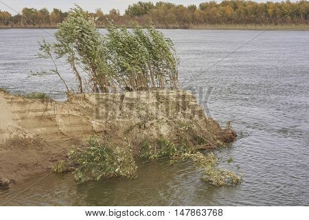 collapse river bank and willow bush in Siberia