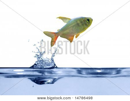 small fish is jumping above blue water