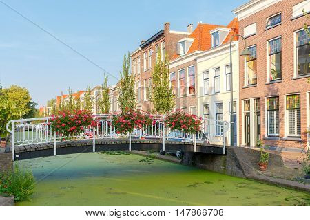 The Dutch city Delft with the channel in the green duckweed. Netherlands.