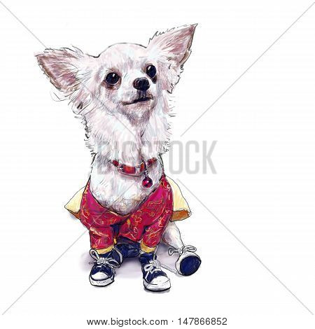 Painting illustration of pomeranian dogwearing clothes and shoes on white background